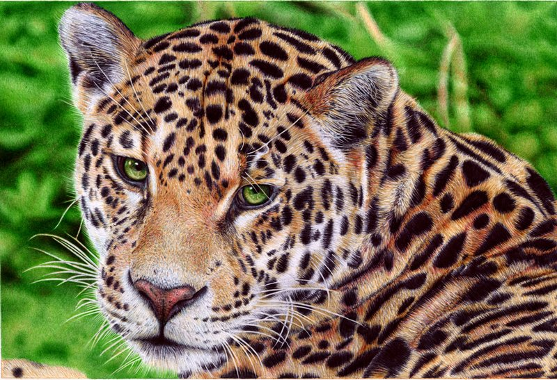 Tumblr - Jaguar___ballpoint_pen_by_vianaarts