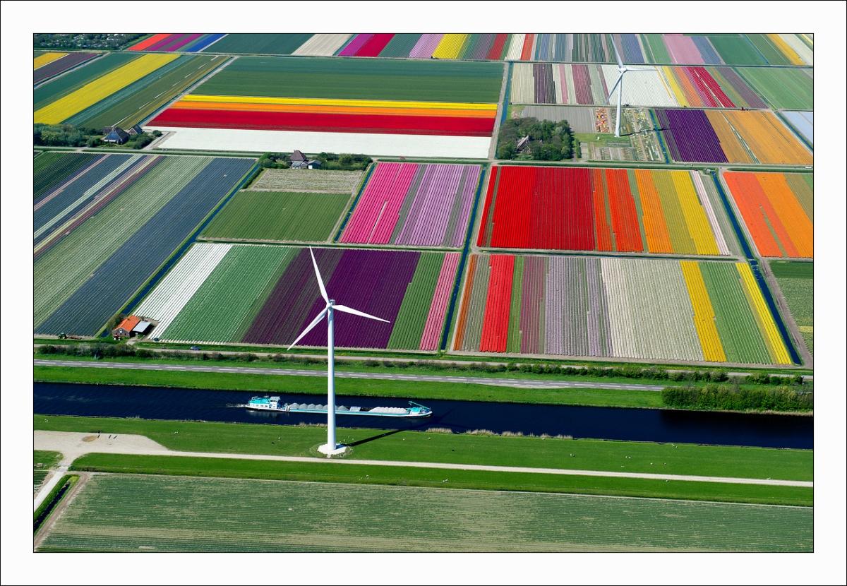 Tumblr - Tulip fields and windmills