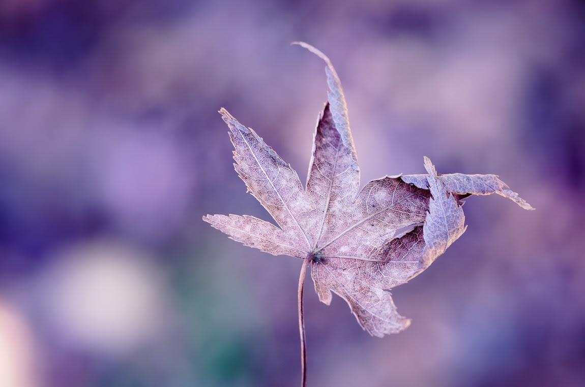 Tumblr - Leaf, folding tips