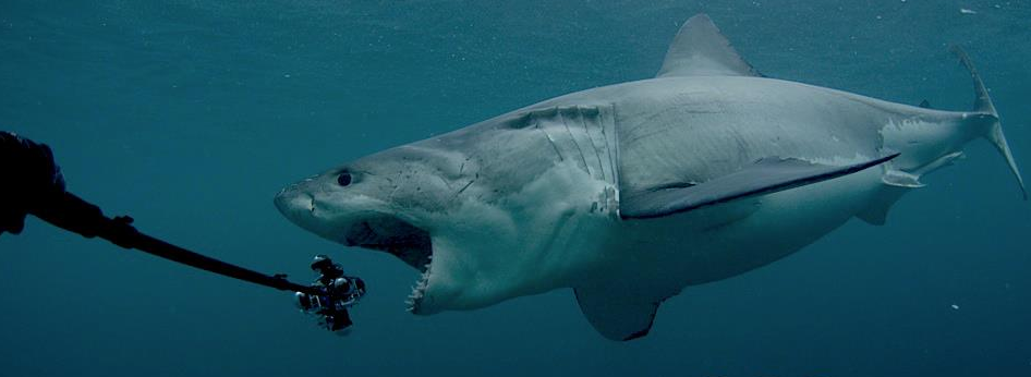 Tumblr - Shark eating GoPro