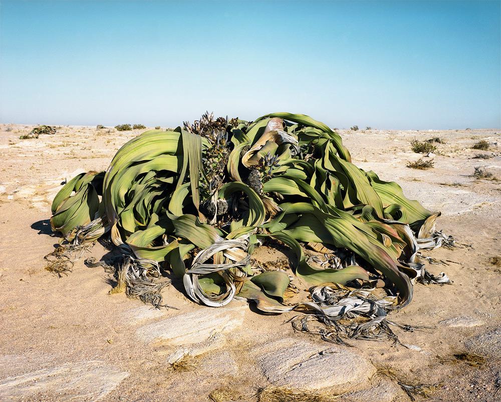 Tumblr - Welwitschia_0707_22411_txt