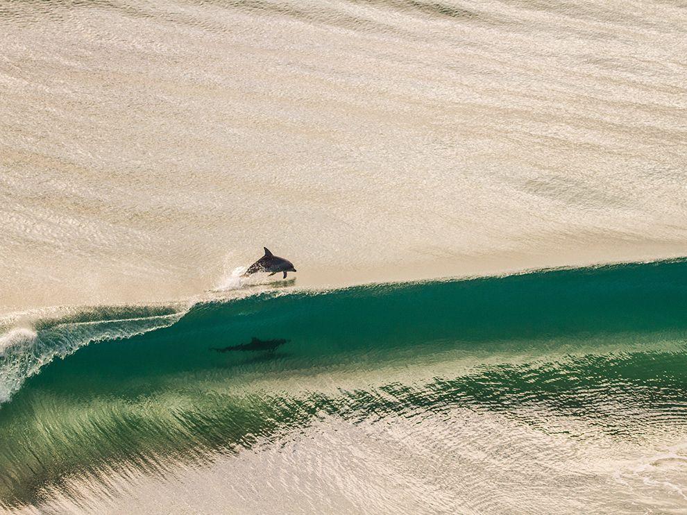 Tumblr - Dolphin-point-danger-australia_80558_990x742