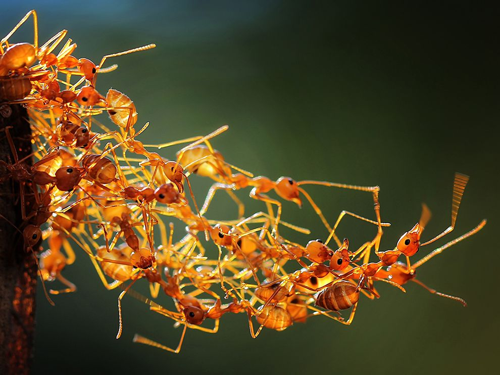 Tumblr - social-worker-ants-macro_86239_990x742