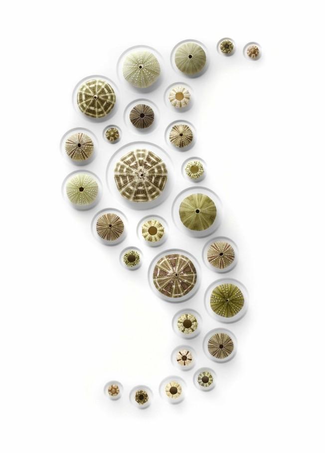 Tumblr - 24x30-Urchin-SpheresCU-1254x1746