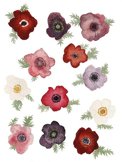 epercival-poppies-anemones_425