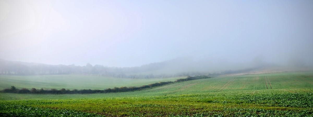 Diary - Foggy Derwent 2